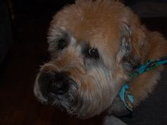 diamond dog food recall