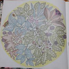 Youngok's Happy Arts: Coloring Book : Secret Garden (6) - Two Owls and One Bee  #coloringbookforadults #coloringbook #colortheory #secretgarden #johannabasford #secretforest #secretforestocean #비밀의정원 #컬러링북