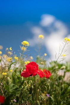 colorida primavera. colorful Spring.