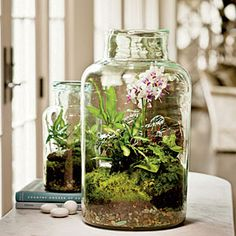 GARDEN | Garden Under Glass | No need to brave cold winter winds when you can create a tiny, beautiful terrarium indoors.