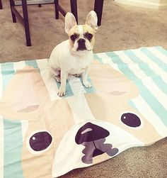French Bulldog on matching blanket