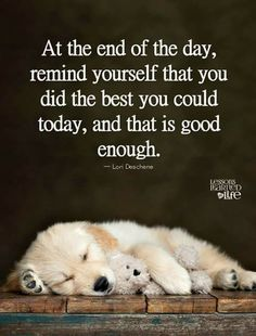 Lessons Learned In Life, Polar Bear, Life Quotes, Inspirational Quotes, Feelings, Words, Quotes About Life, Life Coach Quotes, Quote Life