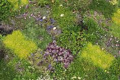 Floral lawn: Floral lawn at Avondale Park, London - low flowering groundcovers planted in squares Gravel Garden, Lawn And Garden, Pergola Plans, Pergola Kits, Avondale Park, Grass Alternative, Landscape Design, Garden Design, Flowers