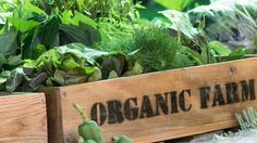 How to scale organic local marketing