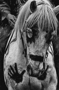 horse ,tribal