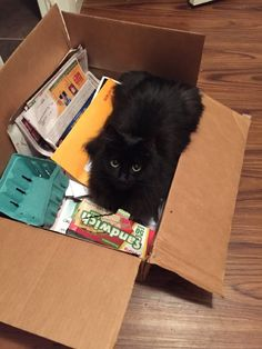 Box Kitty is Best Kitty - credit to: swipurr.com