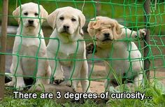 The three degrees of curiosity. #funny #dogs #puppies #adorable #cute