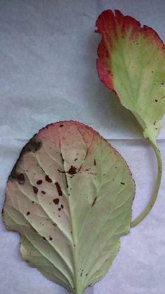 Autumnal contours III. Photo credit: Paola De Giovanni