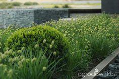 Ogród tworzę nowoczesny czyli wewnętrzna walka jak nie zostać kokoszką :) - strona 654 - Forum ogrodnicze - Ogrodowisko