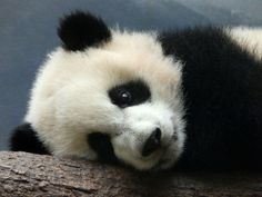 Mei Huan's precious face | Flickr - Photo Sharing!