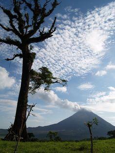 Ceiba view