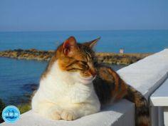 Griekenland vakantie reizen 2021 mogen we al naar Griekenland