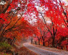 Pictures of Korea Daejeon, Korea Tourism, South Korea Travel, Beautiful Photos Of Nature, Flamboyant, Travel Info, Photo Galleries, Trail, Country Roads
