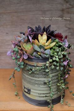 Succulents.  Love the pottery dish