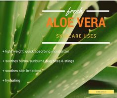 Aloe Vera benefits and Citrus and Aloe Soap http://puro.co/collections/soaps/products/citrus-and-aloe-soap