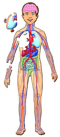 full picture real human body | full human body diagram ... full mouth diagram full body diagram #14