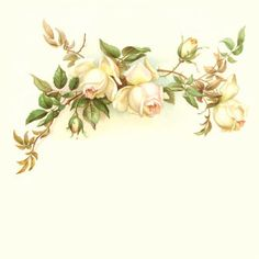 """Photo from album """"Rose Wedding"""" on Yandex. Old Paper, Vintage Paper, Vintage Flowers, Vintage Floral, Page Borders Design, Etiquette Vintage, Pretty Phone Wallpaper, Montage Photo, Notebook Paper"""