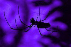 Purple and Blue Aesthetic Dark Purple Aesthetic, Rainbow Aesthetic, Violet Aesthetic, Purple Walls, Purple Haze, Magenta, Amelie, Laika Studios, Yennefer Of Vengerberg