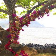 Tree branch garlanded with king proteas and bougainvillea for a wedding in Hawaii