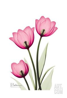 Tulips Art Print by Albert Koetsier at Art.com
