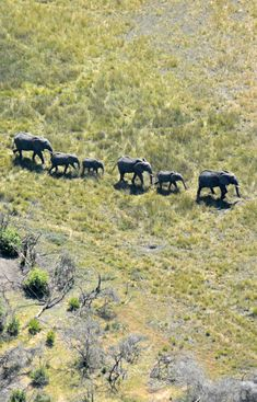 Botswana elephants aerial shot (Wil 6380)
