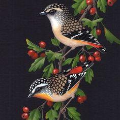 Shop art by Lyn Cooke - 13 artworks for sale on Bluethumb. Bird Painting Acrylic, Long Painting, Tulip Painting, Watercolor Bird, Pretty Birds, Beautiful Birds, Animals Beautiful, Vintage Bird Illustration, Australian Birds