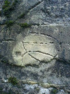 vine 'carving'