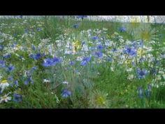 релакс Шопен красивая, успокаивающая музыка