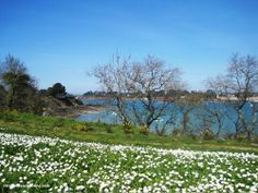 Spring in #Brittany! www.travelfranceonline.com
