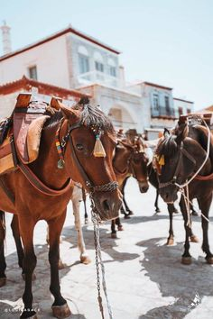 Donkeys in Hydra, Greece / Thinking about doing The Yacht Week? Here's the ultimate guide to The Yacht Week Greece! Full of day parties, beautiful sunsets in jaw-dropping locations, and the world famous Nikki Beach party! Places To Travel, Travel Destinations, Time Travel, Yacht Week, Nikki Beach, Once In A Lifetime, Greek Islands, Travel Photographer, Luxury Travel