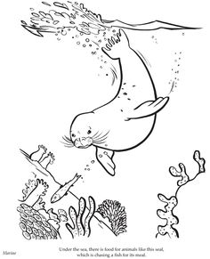 Monk Seal Swimming Underwater coloring page | Heart Smiles ...