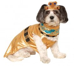 Let your dog be Queen of the Nile in this Cleopatra Costume this Halloween. Gold lame with jewels befitting a Queen. She'll be gorgeous. Limited Quantities so order now.