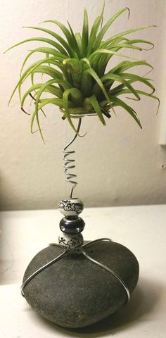 Best Amazing Air Plant Display Ideas 9 – Best Garden Plants And Planting Garden Art, Garden Plants, House Plants, Water Garden, Air Plant Display, Plant Decor, Succulent Display, Hanging Plants, Indoor Plants