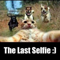 Looks like a rattie is the ring leader of this cat's final selfie . Dump A Day Attack Of The Funny Animals - 26 Pics Funny Animal Jokes, Funny Cat Memes, Cute Funny Animals, Funny Animal Pictures, Cute Baby Animals, Funny Cute, Funny Dogs, Cute Cats, Hilarious