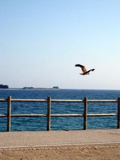 ひろの浜  in Japan Ise Shima