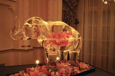 A large scale elephant ice sculpture with flowers encased.