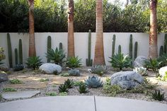 Author sees growth in trend of replacing lawns - Agaves and other succulents are mainstays of this modernistic rock and gravel garden. Dessert Landscaping, Succulent Landscaping, Landscaping With Rocks, Yard Landscaping, Landscaping Software, Dry Garden, Gravel Garden, Zen Rock Garden, Agaves