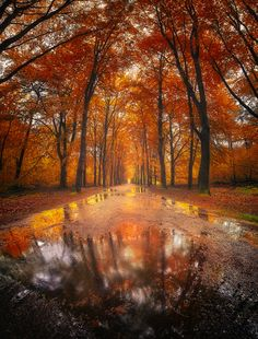 """rosiesdreams: """"Reflection in Autumn. By Daniel Laan. Tumblr Fall Pictures, October Country, Good Vibe, Distinguish Between, Autumn Forest, Land Scape, Nature Photography, Photography Ideas, Travel Photography"""