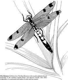 Welcome to Dover Publications Dragonfly Images, Dragonfly Art, Colouring Pages, Coloring Pages For Kids, Coloring Books, Pattern Images, Pattern Art, Stencil Font, Stencils