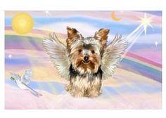 Yorkshire Terrier Apparel, T-Shirts, Sweatshirts, Hoodies, Yorkies, Yorkie Dogs, Pet Loss Grief, Loss Of Dog, Yorkshire Terrier Puppies, Terrier Dogs, Puppy Stages, Dog Memorial, Rainbow Bridge