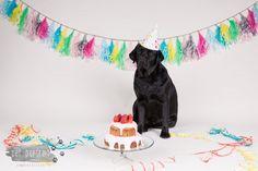 Verjaardag Labrador Juno - 3 jaar - Doggy Cakesmash-2