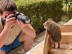"Hedgehog posing - Join me on <a href=""https://www.behance.net/LukaNikolic"">Behance</a>"