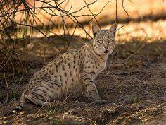 Phulwari Wildlife Sanctuary - in Rajasthan, India