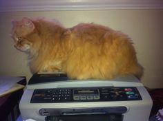 Am I scanning properly Mr. Ken?