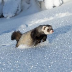 A lot of pictures were taken when we were away. This is me running through the snow ❄️⛄