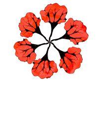 Floresbuque