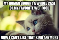 40 Hilarious Struggles Only Cat People Can Understand. The 3rd One Sums Up My Life...