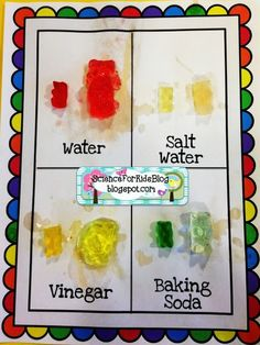Gummy Bear Science ~ fun activity for second grade large or small groups. More