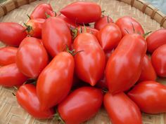 Tomato, Ropreco - 65 days. early sauce tomato. good for cool summers.