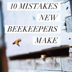 Many new beekeepers learn things the hard way As a beekeeping instructor its my job to keep my students from meeting this all too common fate Read on to find out the. Bee Hive Plans, Beekeeping For Beginners, Raising Bees, Raising Chickens, I Love Bees, Backyard Beekeeping, Bee Friendly, Save The Bees, How To Keep Bees